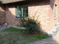 lindenhof-ruegen-10.jpg